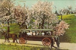 Horse drawn bus on road next to apple orchard in bloom
