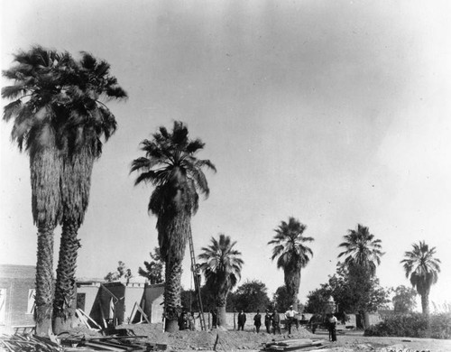 Moving palms on San Pedro Street