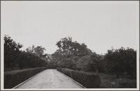 Estate of R. H. Lacy, South Pasadena Avenue at Garfield Avenue; orange trees and oaks