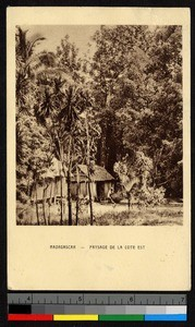 Small wooden huts standing in the forest, Madagascar, ca.1920-1940