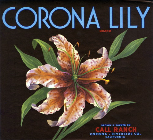 "Crate label, ""Corona Lily Brand."" Grown and packed by Call Ranch. Corona, Riverside Co., Calif"