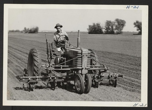 Roy Himoto, a farmer from Walnut Grove, California, is here shown operating a cultivator on one of the large Curtiss Candy Company's farms northwest of Chicago. Himoto was relocated from the Tule Lake Center. Photographer: Mace, Charles E. Marengo, Illinois