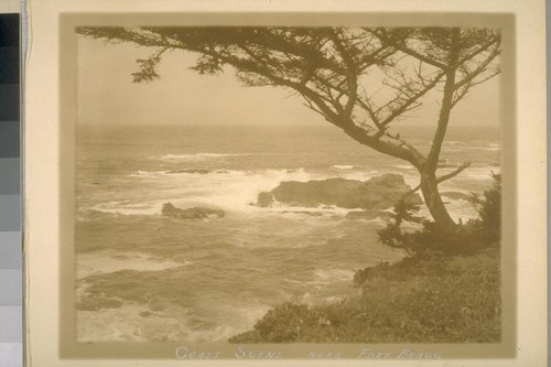 Coast Scene near Fort Bragg