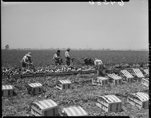 Mexican American agricultural laborers, Culver City (Calif.)