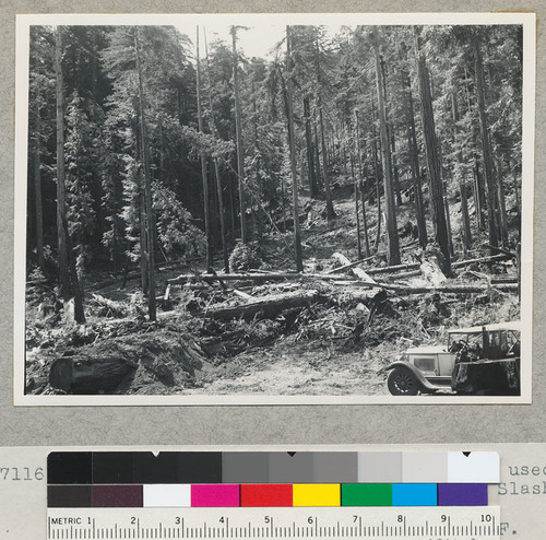 Redwood region. View from same stump used from #7115 and at right angles to left. Slash deep here--being near the landing. 7/16/42 E.F