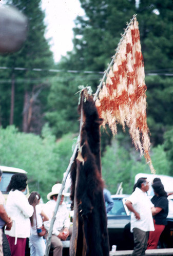 Close-up of bearskin and maple bark flag at the Janesville Bear Dance--1982