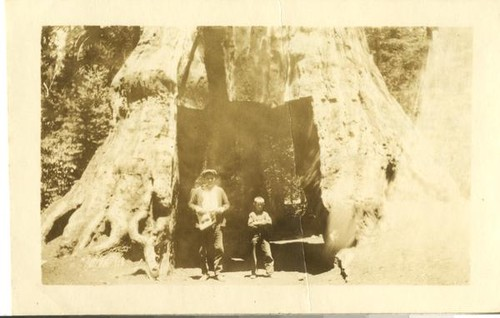 Mariposa Grove, Frank and George Laumann (8 years old)