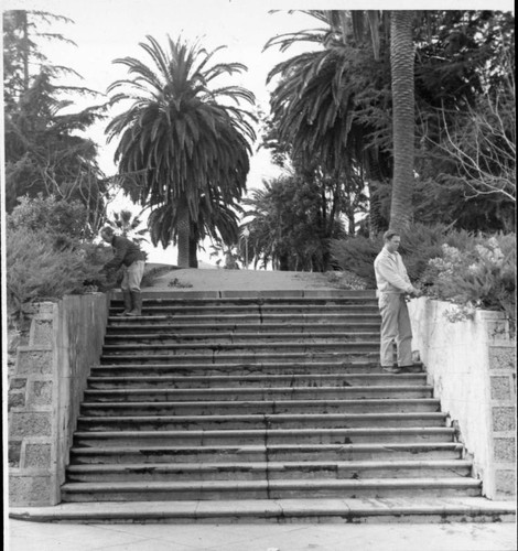 Gardeners tending to plants around the stairs at Hill Plaza Park, Petaluma, California, about 1960