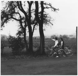 Bicyclists admiring grape vineyards, Sonoma County, California, about 1970