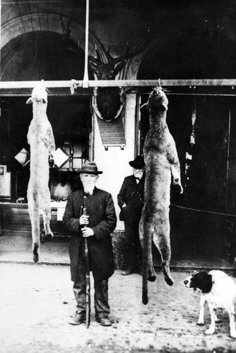 Hunter with two mountain lions