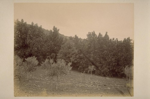"""Sobre Vista"", Chestnut and Walnut Orchard of Col. Geo. F. Hooper"