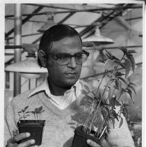 Subodh Jaim, a researcher studying amaranth (a grain) at UC Davis, Dept. of Agronomy, later a professor at UCD. He is holding two plants