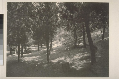 [View of woods]