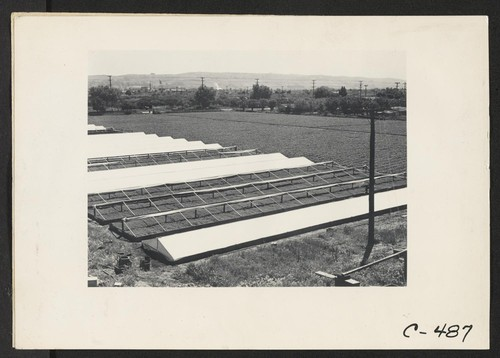 Hayward, Calif. (Hesperian Blvd.)--A portion of Negi leased farm as seen from their water tower. The berry field is just