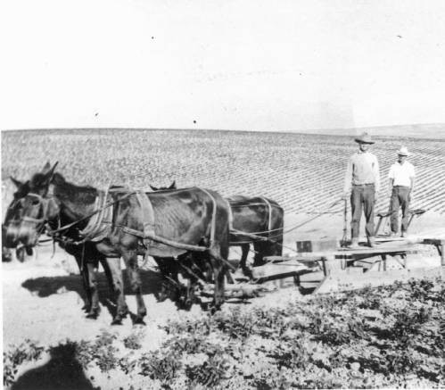 Men with Horses Attached to Plow