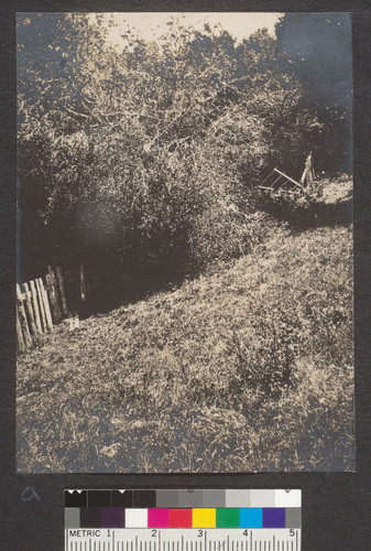 [Toppled tree and damaged fence. Marin County.]