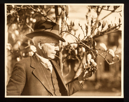 Luther Burbank and Magnolia Tree, 1925