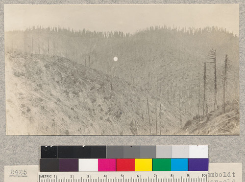 Pacific Lumber Company, Freshwater Creek, Humboldt County, California. Showing one and two year old cut-over and virgin timber. Foggy. June 1923