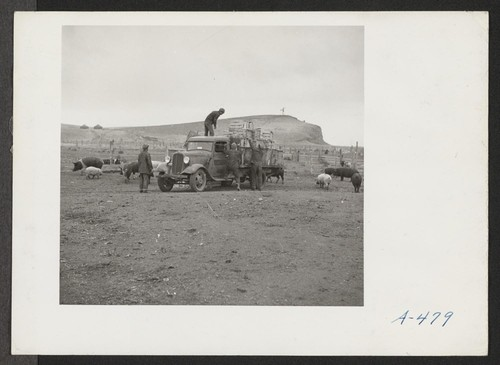 Evacuees unloading a truck load of garbage at the temporary hog farm. Photographer: Stewart, Francis Newell, California