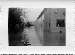Flooded streets of east Sebastopol around the Sebastopol Road and Laguna area by the Apple Time processing plant, 1951