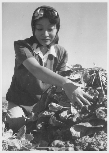 Momayo Yamamoto, formerly a farm worker in Fresno County, California. At present, he [i.e., she] is a farm worker. Momayo Yamamoto in the spinach harvesting field at this relocation center. Photographer: Stewart, Francis Rivers, Arizona