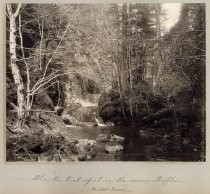 """Where the Trout Sport in the Sunny Riffles, Waddell Creek"""