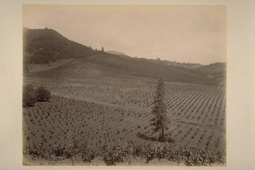 """Sobre Vista"", Vineyard of Col. Geo. F. Hooper, on the Eastern Slope of Sonoma Mountain"