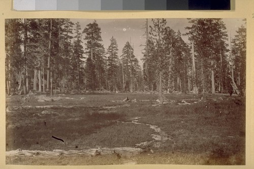Meadows on the North Fork. 1881