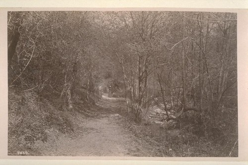 [Woman on path, unidentified location.]--7850