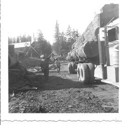 Brown Lumber Company near Fort Ross, about 1951