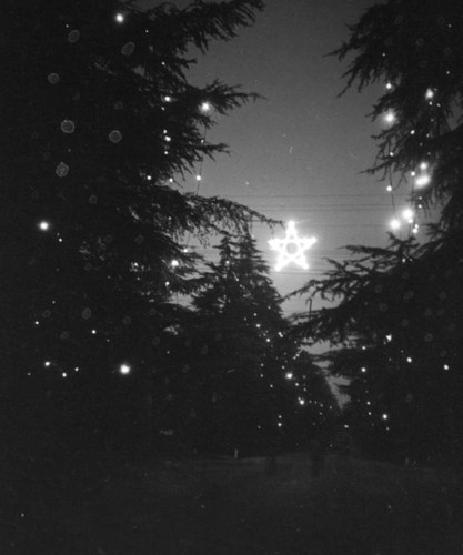 Calisphere Star On Christmas Tree Lane In Altadena