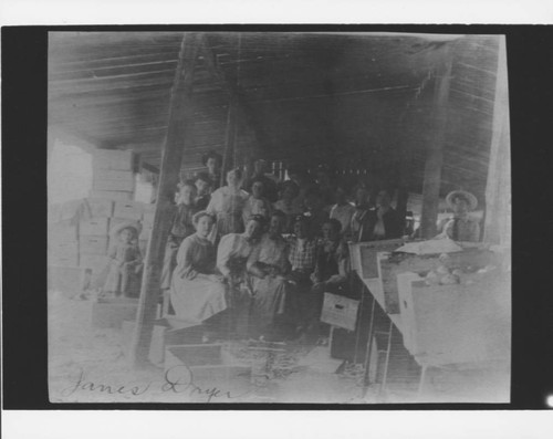 T.J. James Apple Dryer crew, Graton, California, about 1907 or 1908