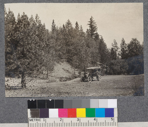 Road through yellow pine forest between Bartlett Springs and Upper Lake in the southern part of California National Forest. September, 1918