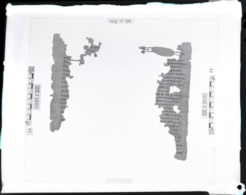 Codex VIII papyri pages 102 and 39