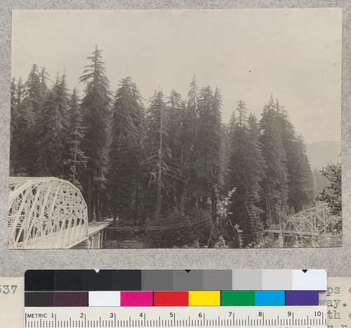 A series of 8 views (#4636-4643) of tops of trees of Dyerville Flat, Redwood Highway. Taken from high bank above road at north end of new bridge over South Fork Eel River near its mouth. E. F. July 17, 1932