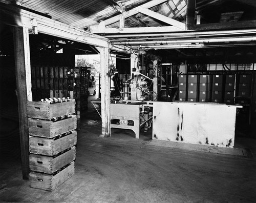Interior of the Utt Juice Company, Tustin, showing boxes of bottles waiting for labels, ca. 1930