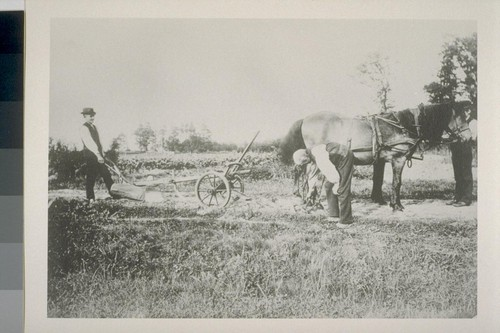 [Unidentified men with horse and plow.]