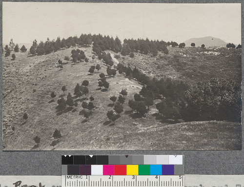 From Flagpole Peak on ridge between Telegraph and Temescal watersheds looking N towards main ridge. Monterey Pine plantation shown here planted 1907. 12 years old when measured May 1919
