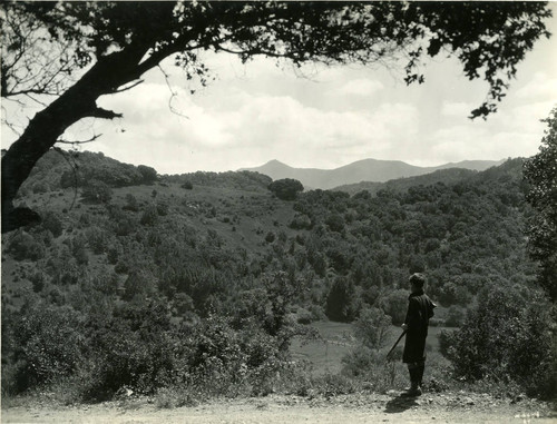 Mt. Tamalpais from Cascades area (Fairfax), Marin County, California, circa 1922 [photograph]