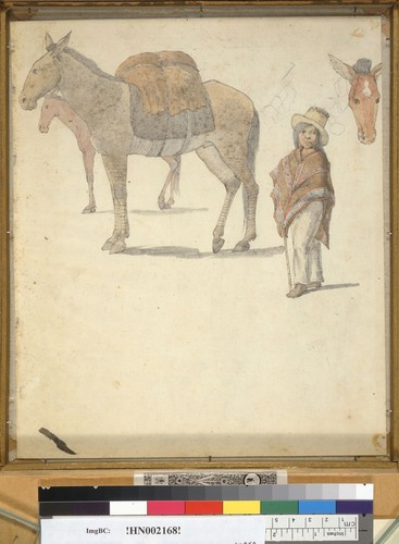 [Mules and Indian boy]