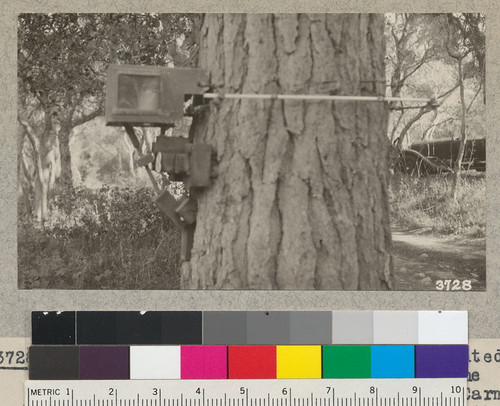 The dendrograph of Dr. McDougall mounted on the trunk of a Monterey Pine at the Coastal Laboratory, Carnegie Institute, Carmel. It records pulsations in diameter growth