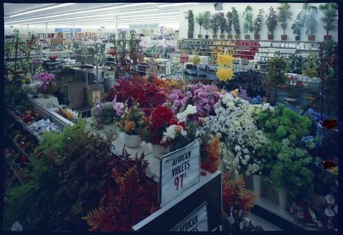 Image View Of The San Jose West Side K Mart Nursery