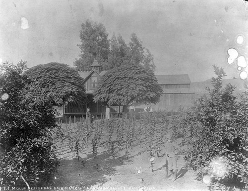 Molls's residence and ranch, Cahuenga Valley