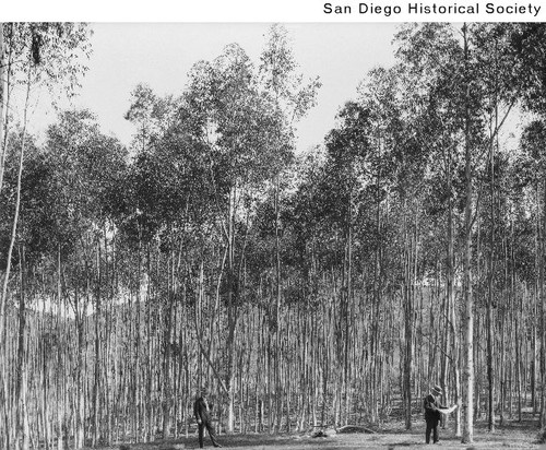 Two men standing in a grove of eucalyptus trees in Rancho Santa Fe