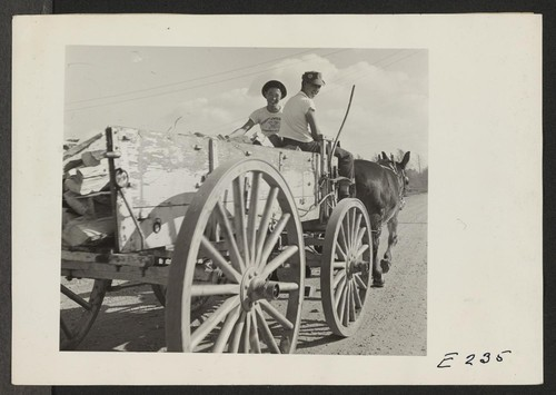 Back to the days of the mule, as two evacuee boys haul firewood with a pair of Arkansas mules. Photographer: Parker, Tom Denson, Arkansas