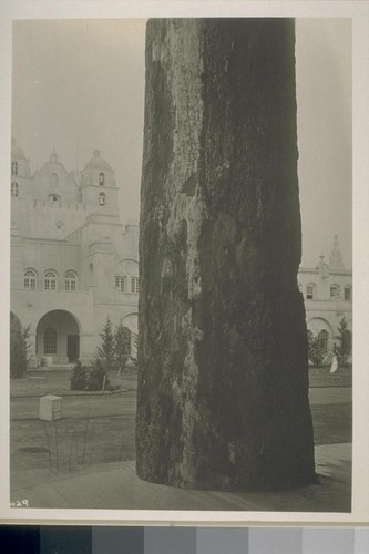 H29. [Tree; California Building in background. During construction.]