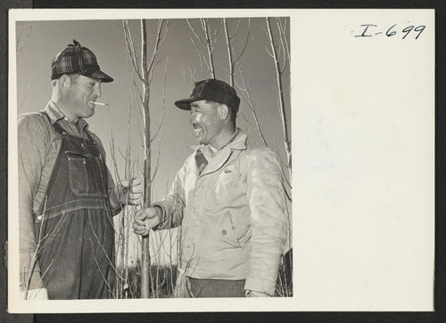 Kiiche Tange, employed at the Bowman Nursery between Amarillo and Hereford, Texas, is shown talking with B. H. Massey, a