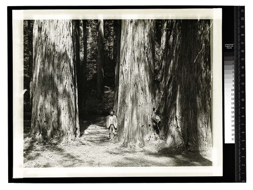 [Man standing next to a redwood tree in a forest]