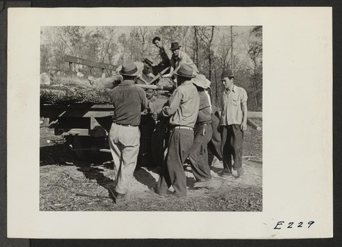 Loading cut timber for hauling to the center operated sawmill. The land is being cleared for agriculture and the wood is used for construction and fuel. Photographer: Parker, Tom Denson, Arkansas