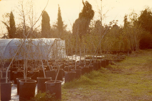 Sepulveda Wildlife Reserve greenhouse, 1980